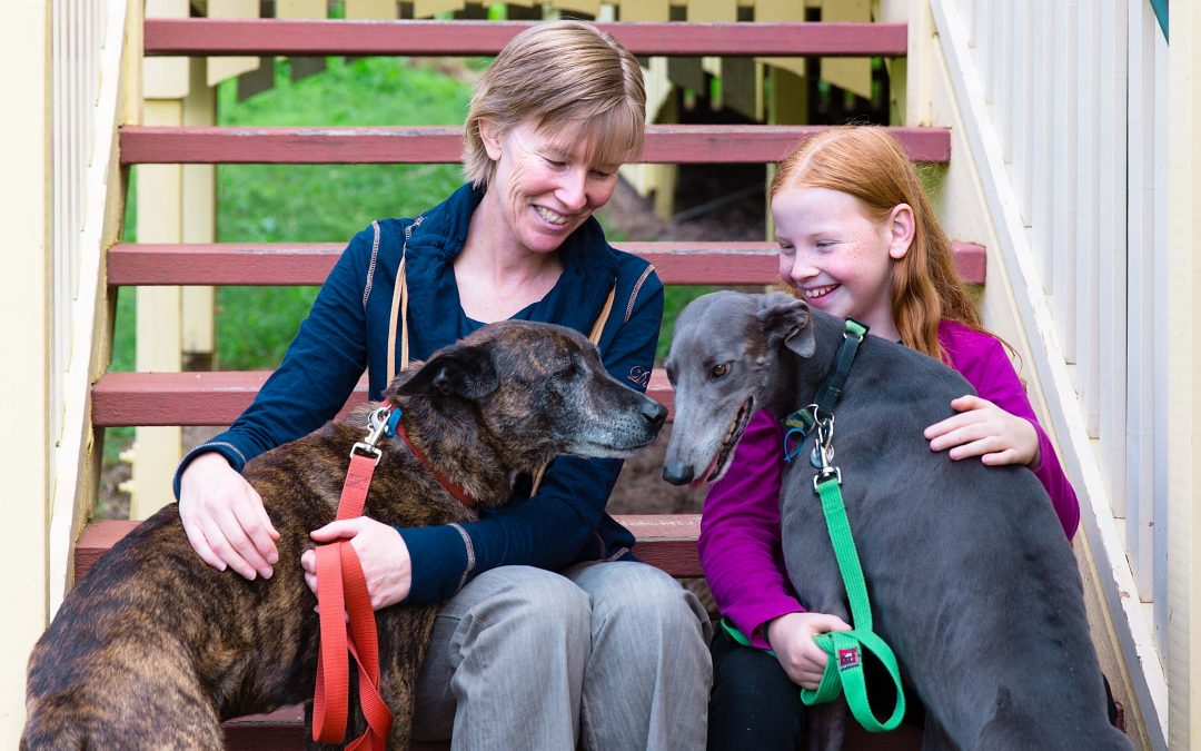 What Fostering Greyhounds Taught Me About Compassionate Leadership